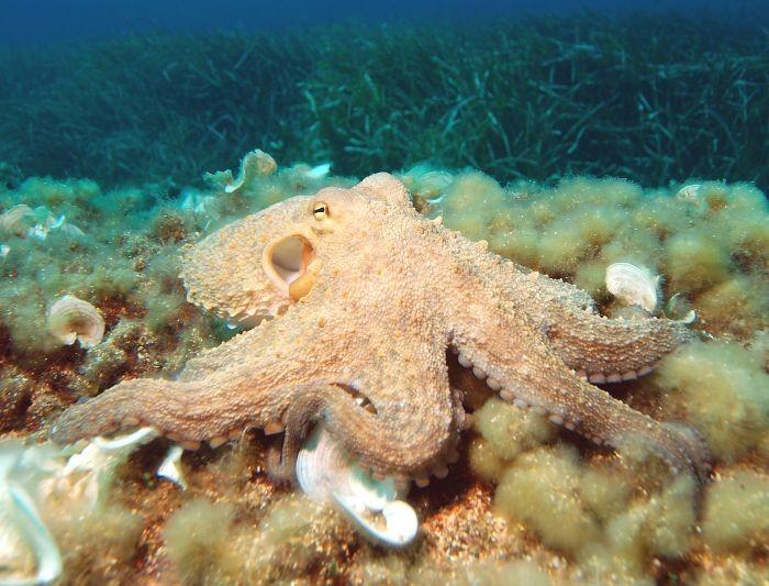 Bạch tuộc là loài nhuyễn thể không có lớp vỏ cứng bảo vệ
