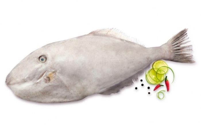 Cá bò da hay còn được gọi với những cái tên là cá gai lưng hay cá bò giấy