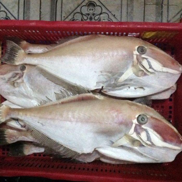 Với giá trị dinh dưỡng cao, cá cá gai lưng mang đến nhiều công dụng cho sức khỏe
