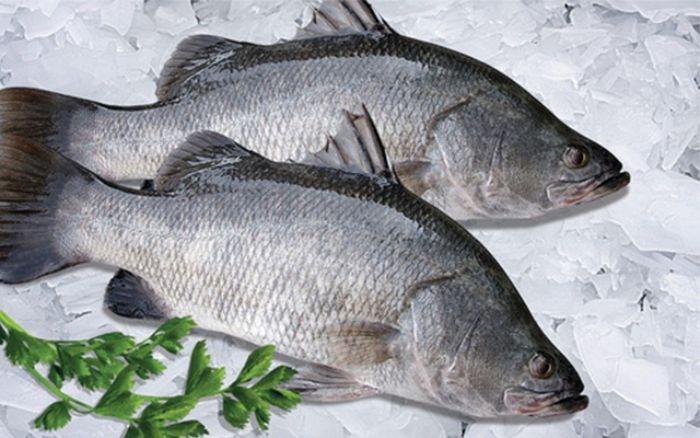 Loài cá này có chứa rất nhiều giá trị dinh dưỡng