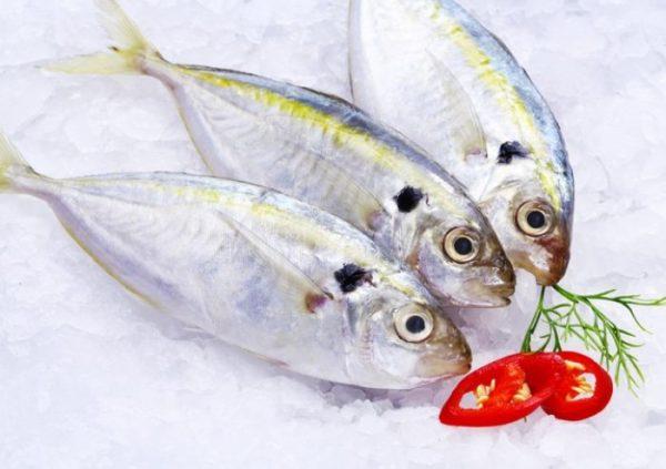Omega 3 trong cá là một acid béo không no rất cần thiết cho cơ thể con người