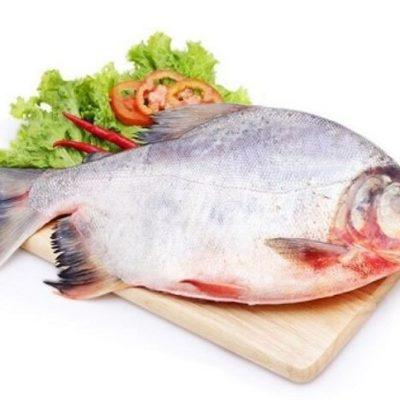 Loại cá này từ lâu đã được biết đến là chứa nhiều dinh dưỡng có lợi cho sức khỏe con người