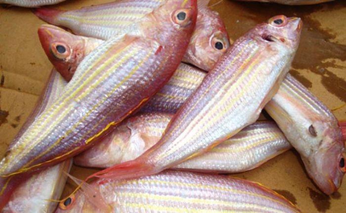 Cá đổng có tên khoa học là Nemipterus furcosus