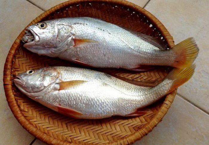 So với thịt, loài cá này sở hữu nguồn khoáng chất quý hơn cùng các nguyên tố vi lượng dồi dào