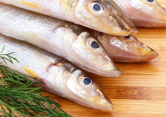 Trong cá đục chứa hàm lượng dinh dưỡng dồi dào