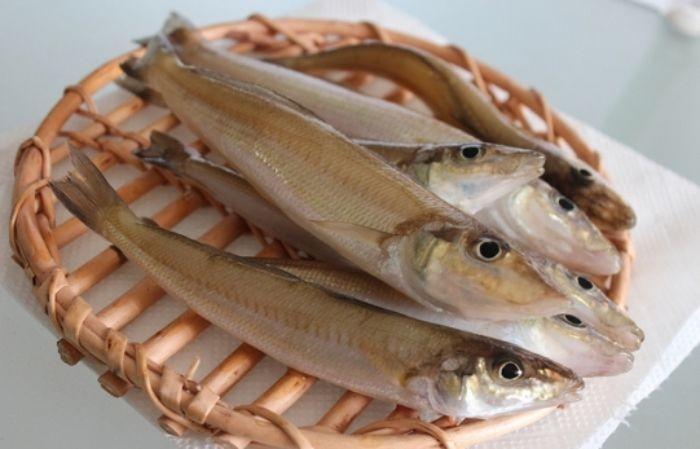Loài cá này có vảy ánh màu xà cừ trông rất đẹp mắt