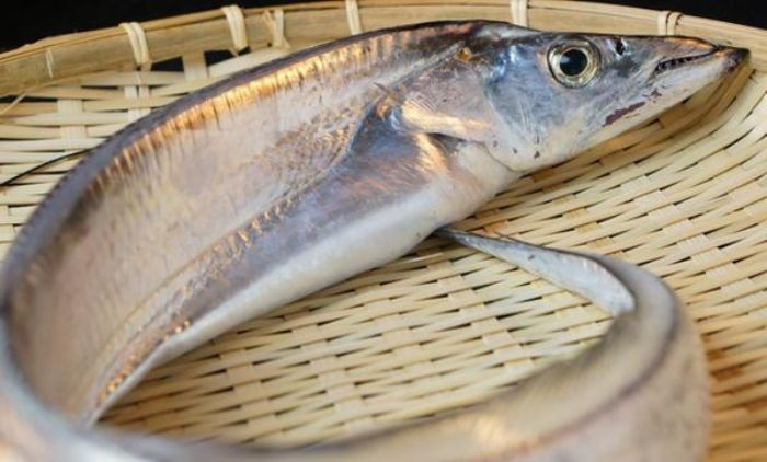 Cá hố hay còn được biết với tên gọi là cá đầu rộng, cá đao,...