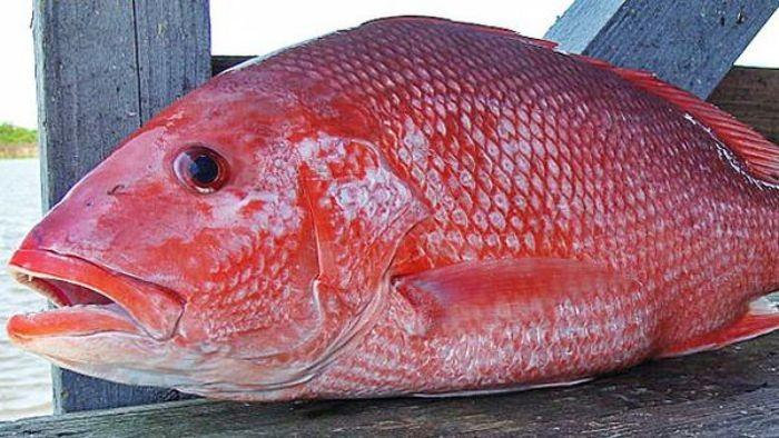 Mọi loại hải sản đều chứa những dưỡng chất và mang giá trị dinh dưỡng khác nhau