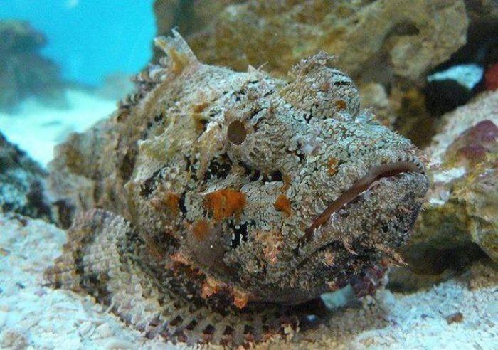 Loài cá này có chứa hàm lượng rất lớn các vitamins, canxi và khoáng chất