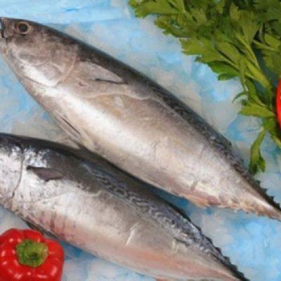 Cá ngừ bông có tên khoa học là Sarda orientalis