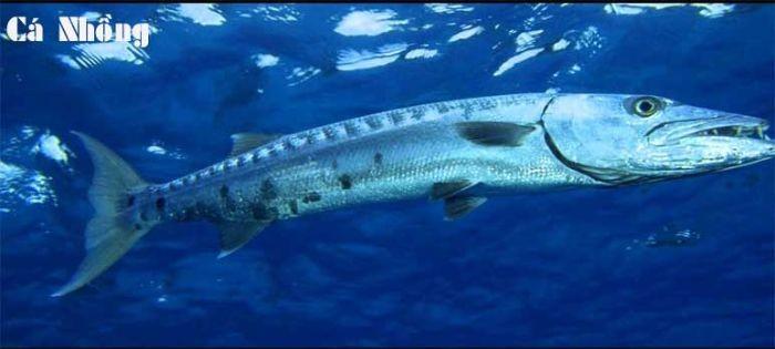 Cá có chứa rất ít chất béo xấu và dồi dào acid béo omega 3