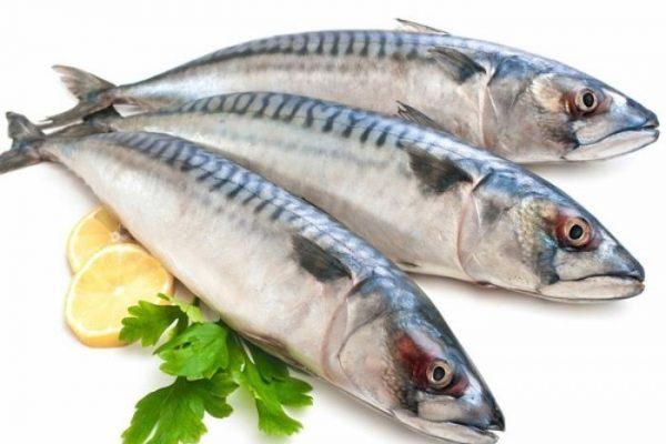 Trung bình một con cá nục trưởng thành sẽ có chiều dài khoảng 15 – 25cm