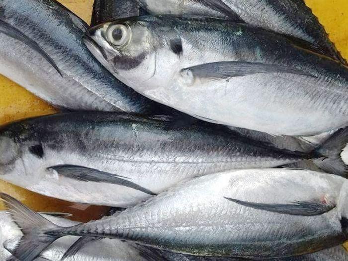 Loại cá này còn chứa hàm lượng dinh dưỡng rất cao
