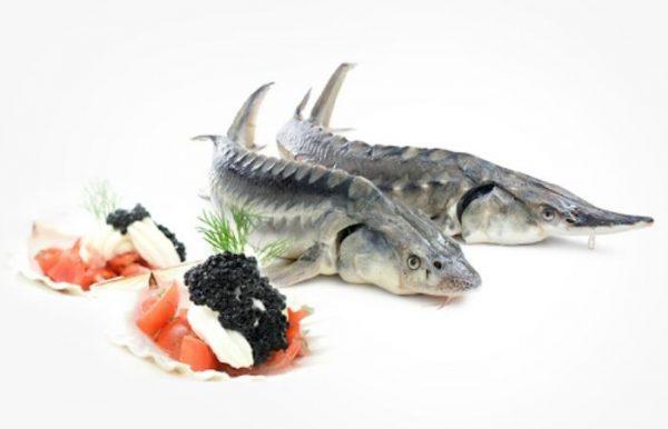 Loại cá này sở hữu thành phần dinh dưỡng cao nhưng lại rất dễ hấp thụ và tiêu hóa