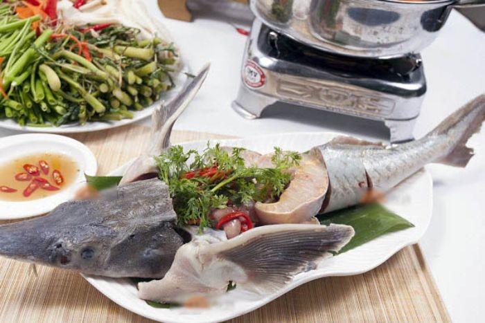 Công dụng của loài cá này đối với sức khỏe con người là gì thì không phải ai cũng biết