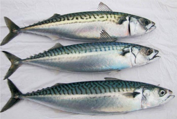 Loại cá này có đặc điểm chung là thân dài, thon, có màu xanh tươi và da rất mềm mịn
