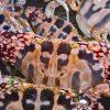 Ghẹ đỏ hay còn được biết đến với nhiều tên gọi khác là ghẹ hoa, ghẹ chữ thập, ghẹ ba chấm...