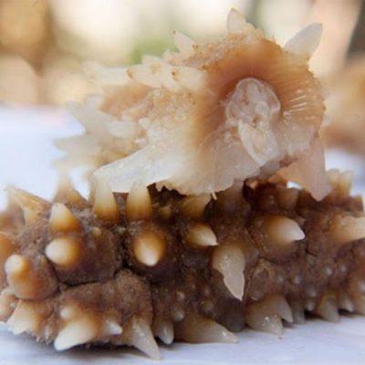 Thực phẩm này là món sơn hào hải vị thường dùng cho các gia đình quý tộc thời phong kiến
