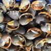 Trong thịt ốc có chứa đa dạng dưỡng chất, vitamin và muối khoáng