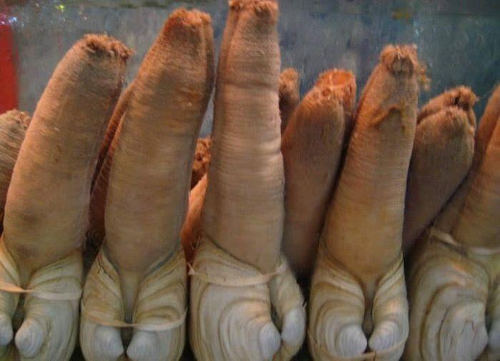 Thịt ốc vòi voi góp phần thải các kim loại nặng ra khỏi cơ thể, ngăn ngừa nguy cơ mắc bệnh tật