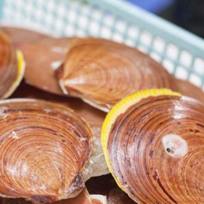 Sò điệp láng là một loại sò biển sống trong tự nhiên ở những khu vực có rạn san hô