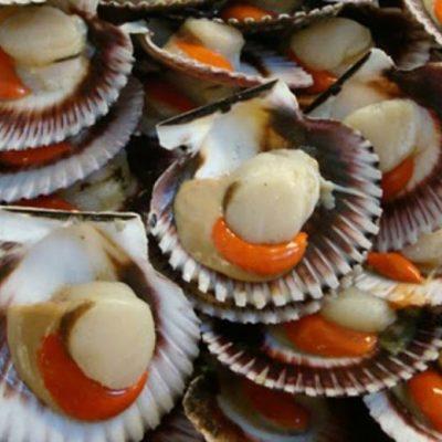 Trong thịt sò điệp có chứa nhiều chứa nhiều vitamin và khoáng chất