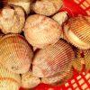 Thịt sò dương có vị ngọt tự nhiên mà không loại hải sản nào có được
