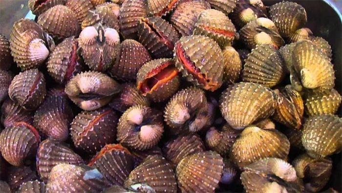 Loài sò này có ruột màu đỏ hồng như máu và được bao bọc bằng lớp vỏ cứng