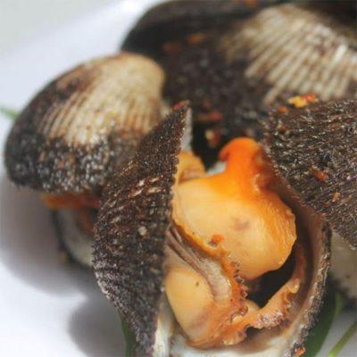 Loại sò này là một vị thuốc trong Đông y có tên gọi là Mao Khảm và mang đến rất nhiều công dụng cho sức khỏe