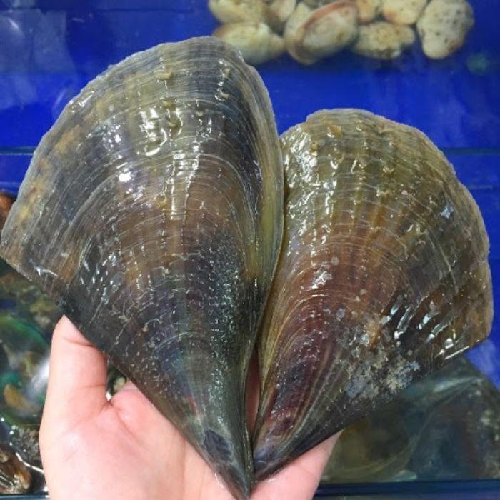 Sò biên mai là loại hải sản mang đến nhiều công dụng cho sức khỏe con người