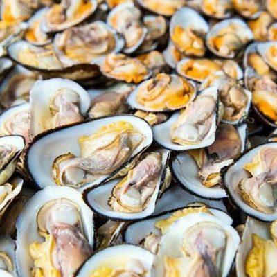 Đây chính là loại hải sản lành tính nên có thể sử dụng được cho cả trẻ em, người lớn, người cao tuổi và phụ nữ mang thai