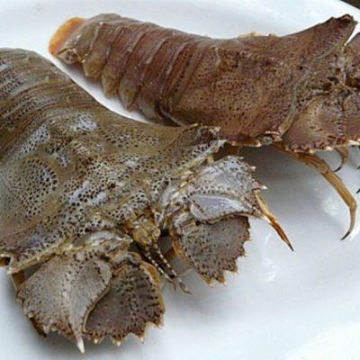 Tôm mũ ni là loại hải sản biến có vỏ như bọ giáp xác nhưng vẫn nằm trong họ tôm biển