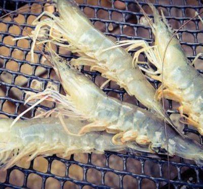 Ăn loại hải sản này thường xuyên sẽ rất hữu ích cho quá trình phát triển thể chất, não bộ ở trẻ em