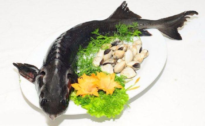 Để món cá tầm nướng giấy bạc được thơm ngon hấp dẫn thì bạn cần phải lựa chọn được những chú cá tươi sống