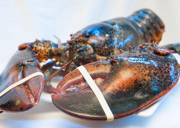 Những người từng có tiền sử dị ứng hải sản thì không nên ăn cháo tôm hùm