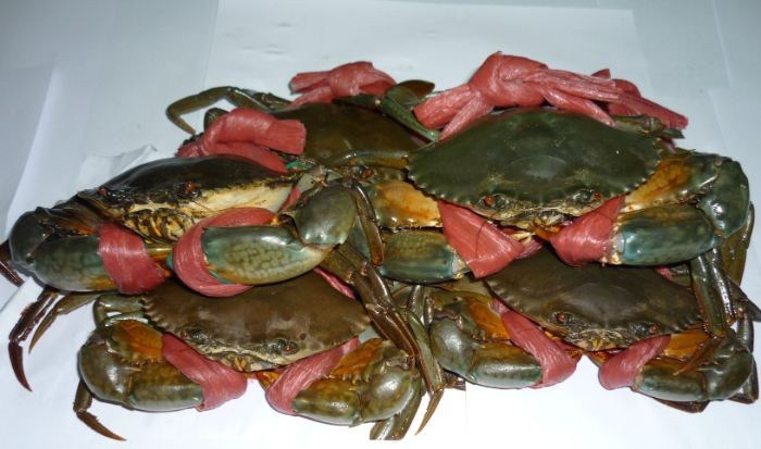 Cách bảo quản cua biển trước khi sơ chế