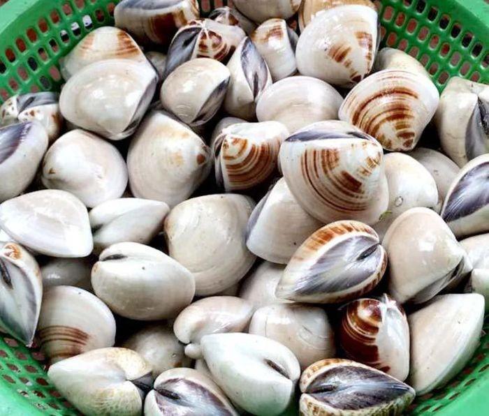 Ngao biển cung cấp cho cơ thể hàm lượng vitamin dồi dào giúp tăng cường thể chất, cải thiện làn da