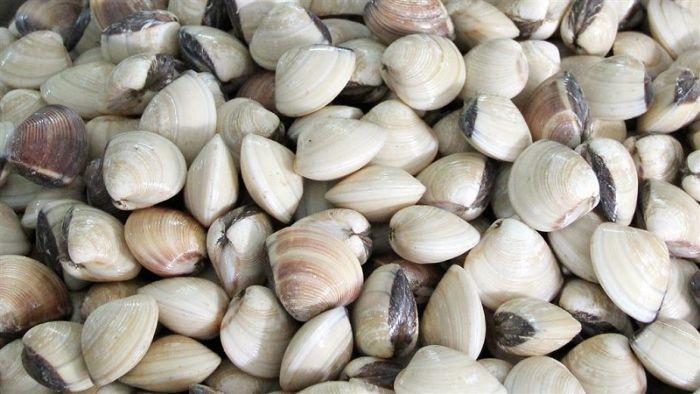 Ngao là loại hải sản có giá trị dinh dưỡng cao, chứa nhiều vitamin và khoáng chất