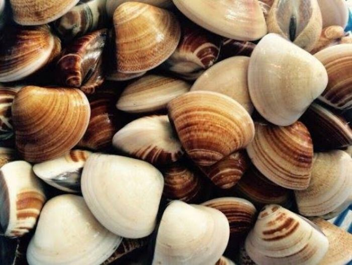 Do chứa nhiều purines và sodium nên những người bị gout, huyết áp cao, tiêu chảy, sốt, cảm gió thì không nên ăn ngao