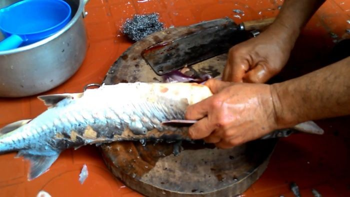Sơ chế nguyên liệu cá tầm