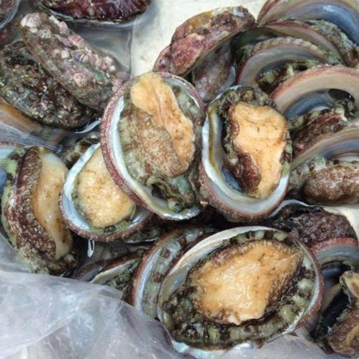 Bào ngư Hàn Quốc là loại hải sản được đánh bắt ở đảo Jeju
