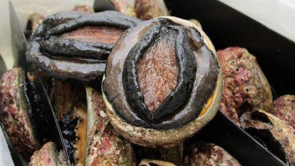 Bào ngư Úc là loại nhuyễn thể vỏ đơn thuộc chi Haliotis và họ Haliotidae