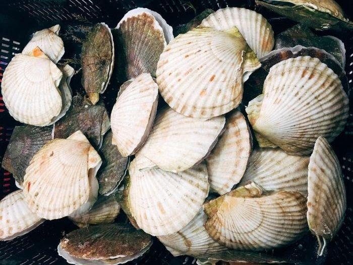 Sò điệp Nhật là một trong những loại hải sản có chất lượng ngon nhất thế giới